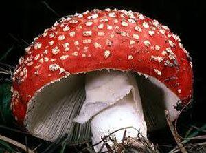 В Днепропетровске зарегистрирована смерть от отравления грибами