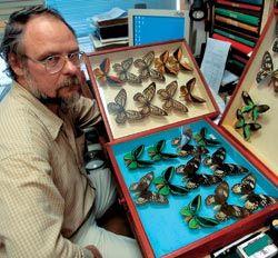 В ДНУ хранится ценнейшая коллекция бабочек