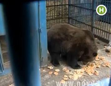 Прогноз погоды от Днепропетровских медведей
