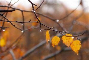 Погода: похолодает и станет больше дождей