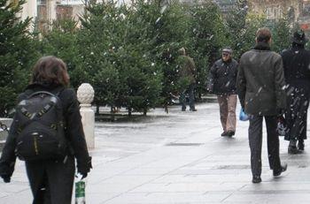 Охотникам за елками грозят штрафами в 170 гривен