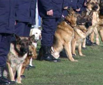 В Днепропетровске выбрали собаку с самым острым обонянием в Украине