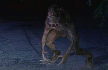 Днепропетровская чупакабра оказалась енотовидной собакой