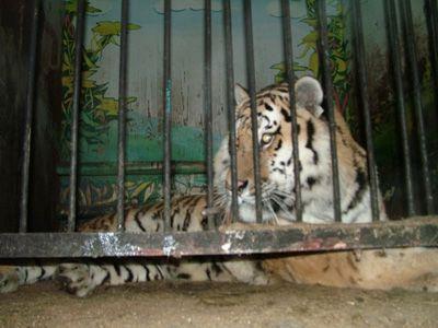 Губернатор Кузбасса защитил животных
