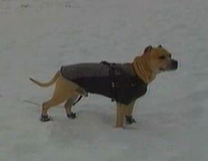 В Черновцах живет единственный в Украине пес-паркурист