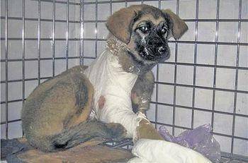 Война за кетамин: ветеринары Днепра только кастрируют