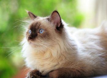 1 марта мир празднует Всемирный день кошки