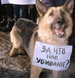 Бродячие собаки: убить нельзя отпустить
