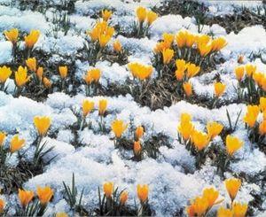 Весна в Днепропетровске: ночью заморозки, днем – почти лето