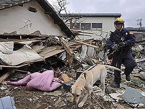 Цунами в Японии могло похоронить целый дом с украинцами