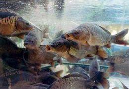 Установлен запрет на лов рыбы в Днепродзержинском водохранилище
