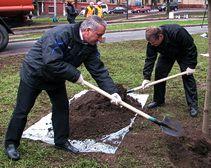 В Днепропетровске посадили 40 тыс деревьев и ликвидировали стихийные свалки