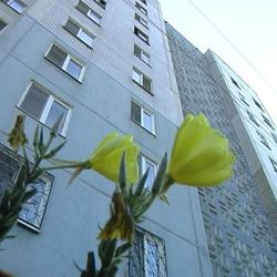 Ремонты в домах Днепропетровска начнут с аварийных объектов