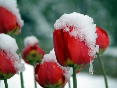 После выходных в Украине пойдет снег