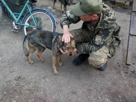 В Днепропетровске ищут хозяина для пса из зоны АТО, который подорвался на «растяжке»