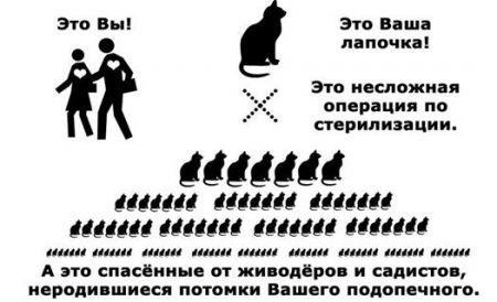 В Днепропетровске стартовала акция по бесплатной стерилизации животных