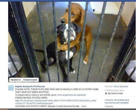 Благодаря Facebook удалось спасти собак, которых должны были усыпить