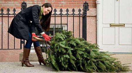 Сколько стоит новогодняя елка в Днепропетровской области