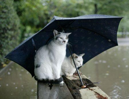 В Украину идут грозовые дожди: прогноз погоды