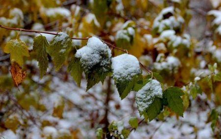 В Украине сегодня выпал первый снег (Фото, Видео)