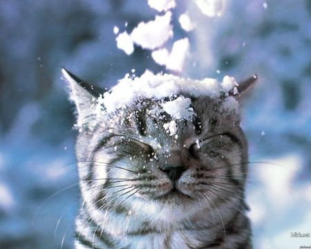 К концу недели Украину припорошит снегом