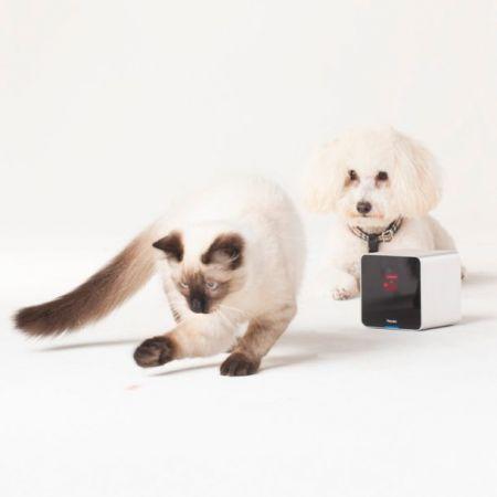 Украинские инженеры разработали веб-камеру для домашних животных