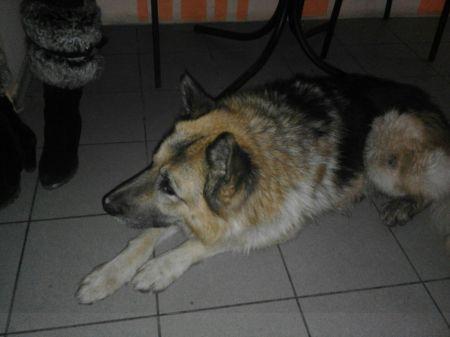 В Днепре появился свой Хатико: пес верно ждет своего хозяина