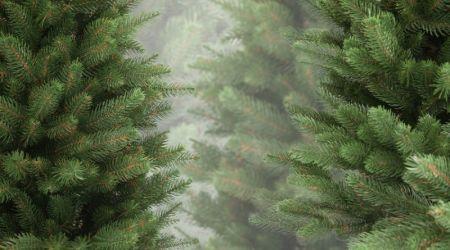 Сколько будут стоить елки в Днепре