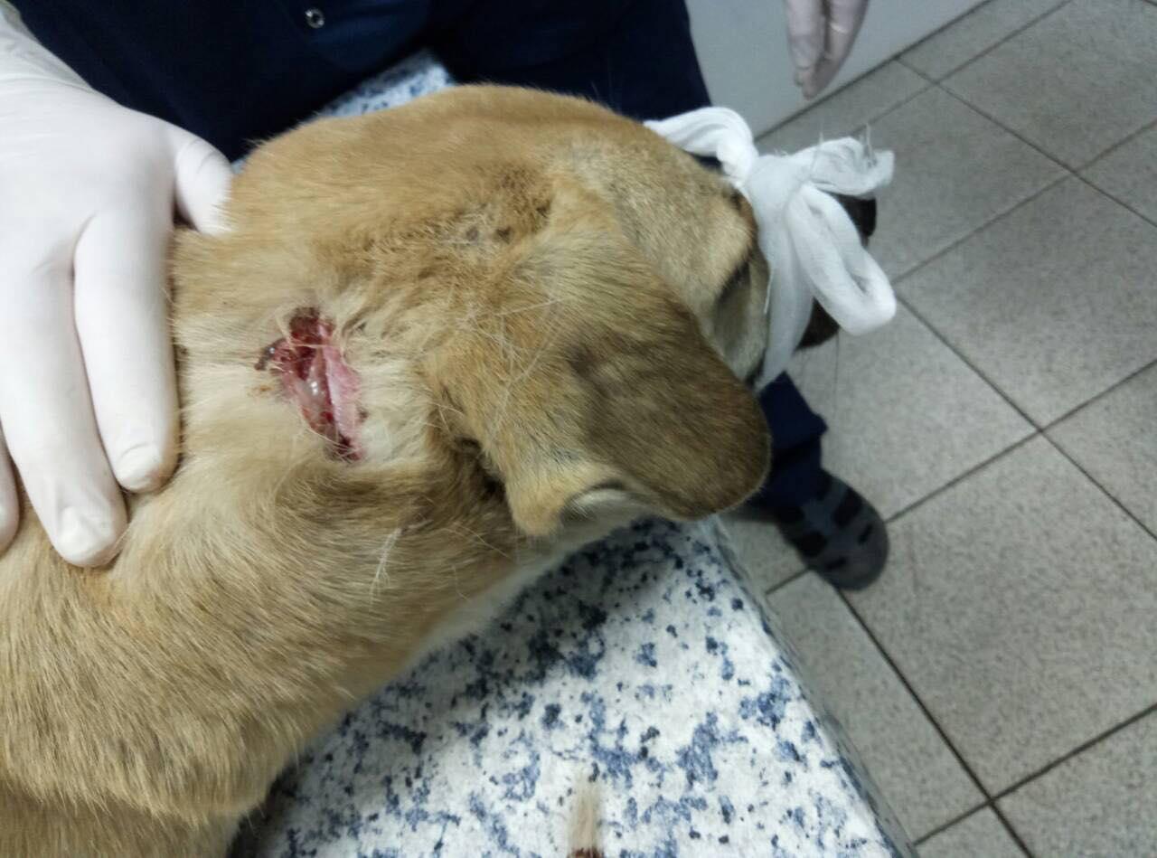 Раны собаке были нанесены лезвием ножа