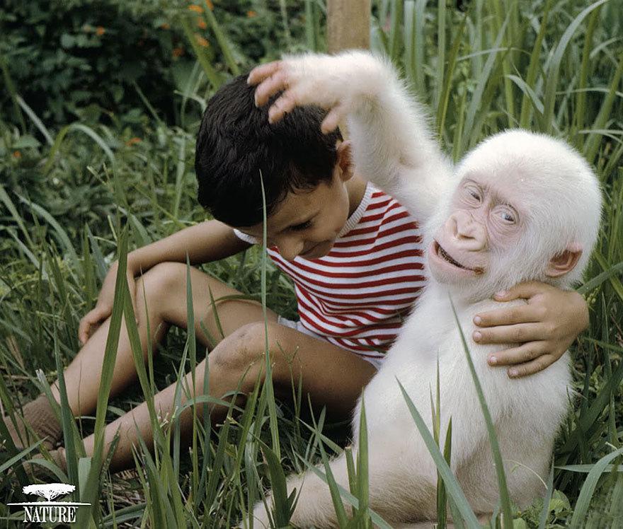 Не такие, как все: 11 животных-альбиносов, которые выглядят (не)реально круто